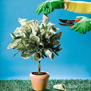 Tiền không mọc trên cây