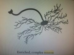 kết nối nơ ron thần kinh và fastrackids